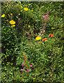 SX8758 : Flowers, Fusion, Paignton by Derek Harper