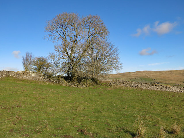 The remains of White Hills farmhouse (2)
