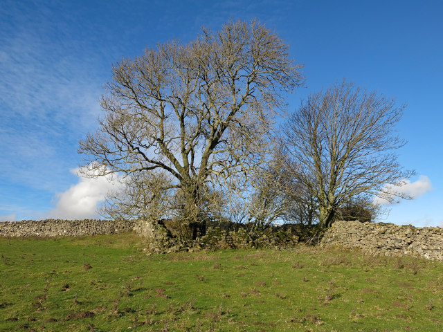 The remains of White Hills farmhouse (3)