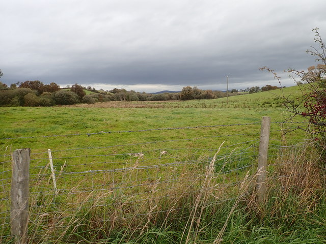 Rough grazing and wooded wetland on the north-east side of the Bannfield Road