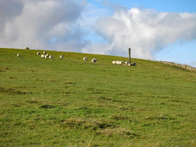 Rough pasture northwest of Slack House