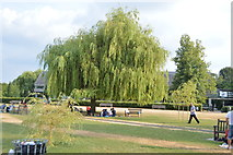 SU7682 : Weeping Willow, Mill Meadows by N Chadwick