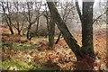 NN4400 : Birches, Loch Ard Forest : Week 48