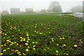 SE5179 : Windfall, High Kilburn Green by Mick Garratt