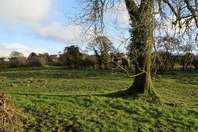 Tree, Mullaghmenagh Upper