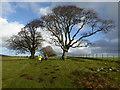 SO3594 : On Linley Beeches in December : Week 48
