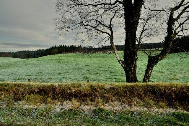 Tree, Legland