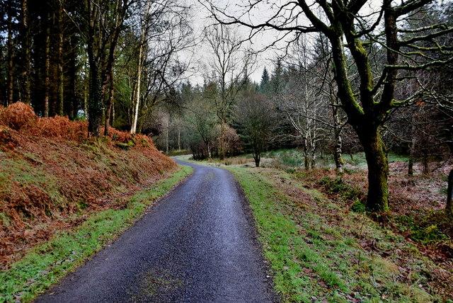 Bracken bank along Cloonty Road