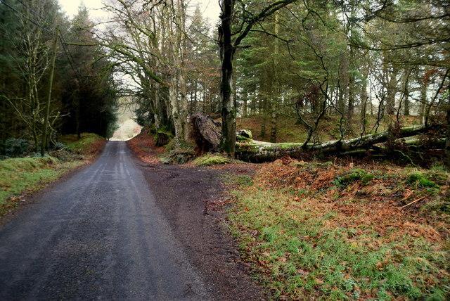 Fallen tree, Barons Court