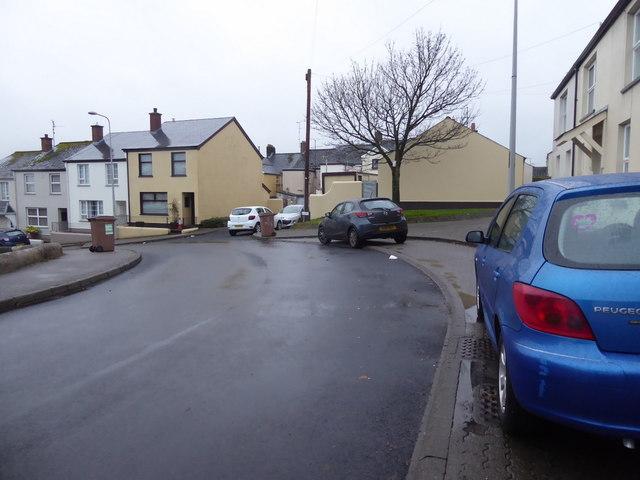 Bare tree along Fairmount Road, Omagh