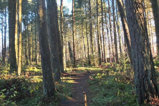 Woodland path near Balerno