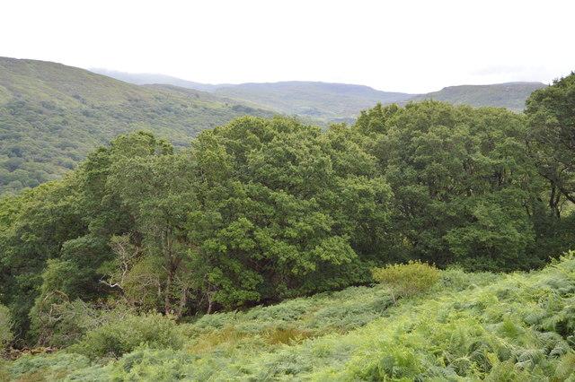 Woodland at Ladies View