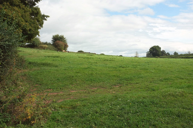 Cattle pasture by Sandy Lane