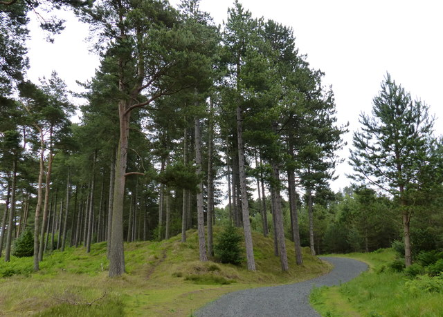 Fife Coastal Path in the Tentsmuir Forest