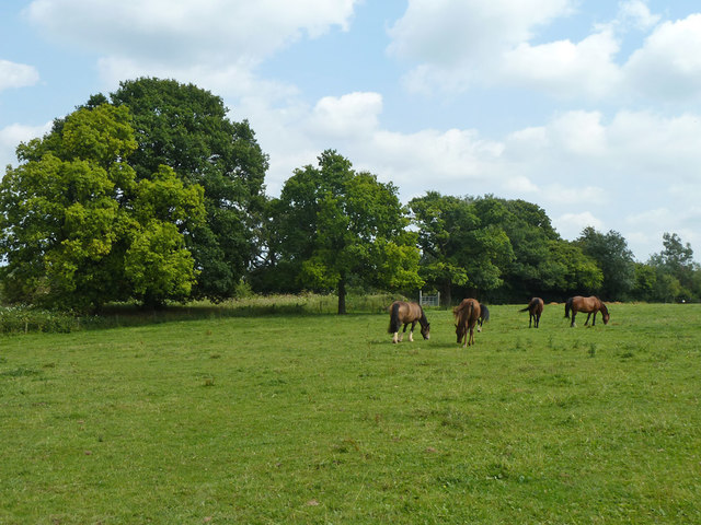 Field with horses