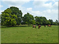 TQ4259 : Field with horses by Robin Webster