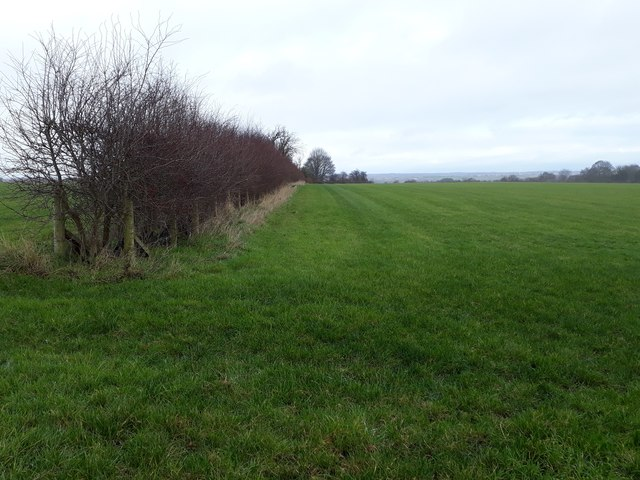 Field boundary, running north from Smithy Lane