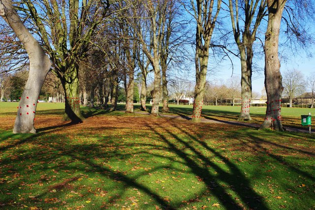 Decorated trees in The Leys, Witney, Oxon