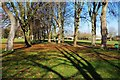 SP3509 : Decorated trees in The Leys, Witney, Oxon by P L Chadwick