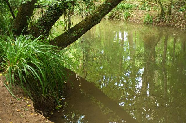 River Chew near Chew Magna