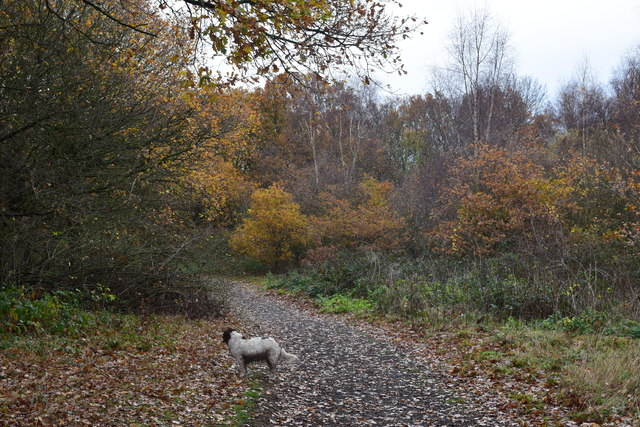 Footpath in Kings wood.