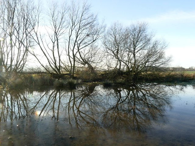 Trees reflected in a flooded field