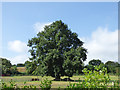 SX0453 : Solitary tree, Tregrehan Mills by Stephen Craven