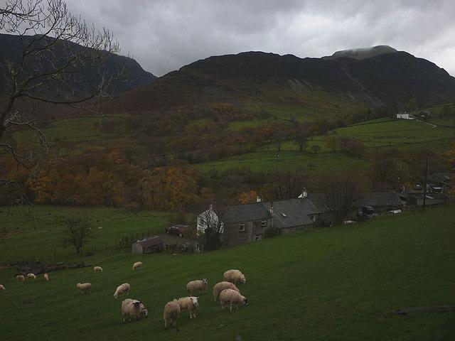 Sheep above, Gillbrow