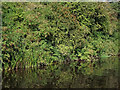 SK4923 : Woodland on the west bank of the River Soar by Roger  Kidd