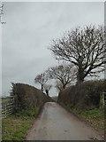 SX9894 : Mosshayne Lane by Rod Allday