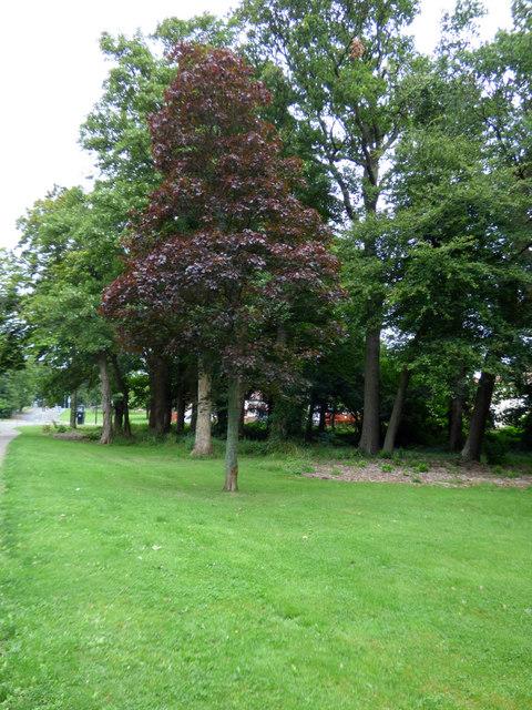 Woodland at University Avenue