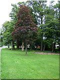 NS3421 : Woodland at University Avenue by Thomas Nugent