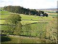 NY8638 : Farmland southeast of Ullsfield Plantation by Mike Quinn