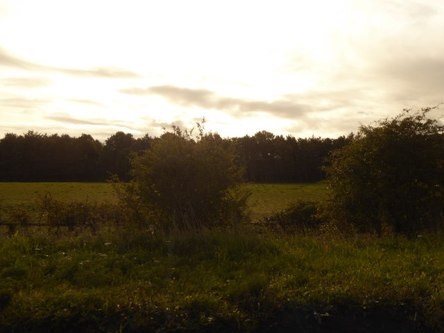 Bushes and fields by the B1288
