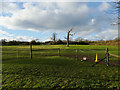 SE2340 : Field with dead tree off Scotland Lane by Stephen Craven