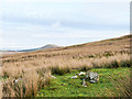NY3424 : Moorland with rocks on Threlkeld Common by Trevor Littlewood