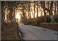 NH5963 : National Cycle Route 1 by valenta