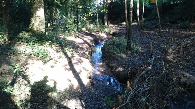 Stream in Roundabout Wood