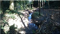 TQ5940 : Stream in Roundabout Wood by John P Reeves