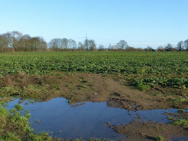 Sugar beet field near Eggborough