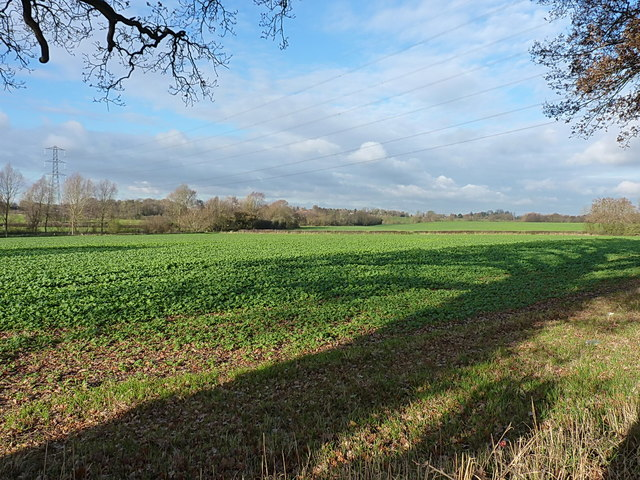 Winter greens in a field north of the B4101
