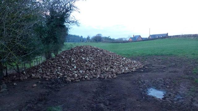 A pile of fodder