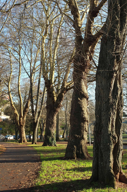 Trees, Upton Park, Torquay