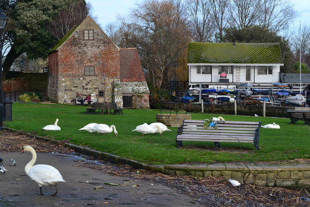 11498a973df3 Swanning about in front of Place Mill © David Martin    Geograph ...