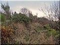 NH6349 : Overgrown Track Croftnacreich by valenta