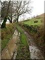 SN6408 : Track at Blaenffynhonnau by Alan Hughes
