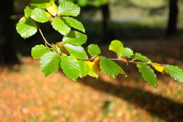 Sunlight on the leaves