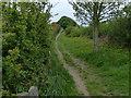TA0196 : North along the Cleveland Way towards Hayburn Wyke by Mat Fascione