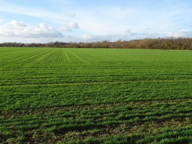 Arable field near Little Comberton
