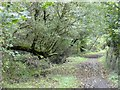 SX0047 : A muddy stretch of NCN3 in woodland at Nansladron by David Smith